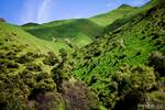 NZ-green-rolling-countryside