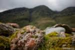 NZ-Franz-Joseph-rocks-moss-and-lichen